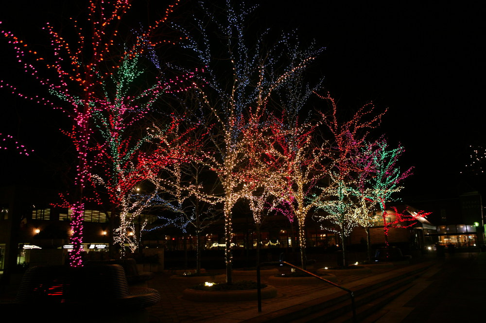 Chicago Holiday Lighting Trees