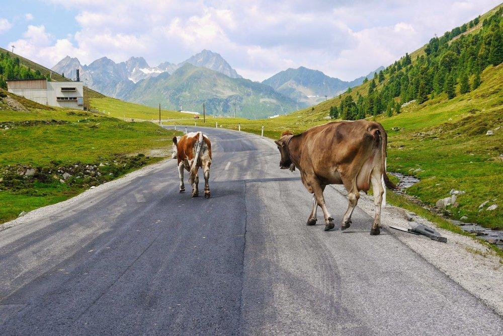 Quelle: Bild aus dem Innsbruck Blog unter: https://blog.innsbruck.info/de/sport-natur/hoch-hinaus-mit-dem-rennrad-auf-2000-meter/