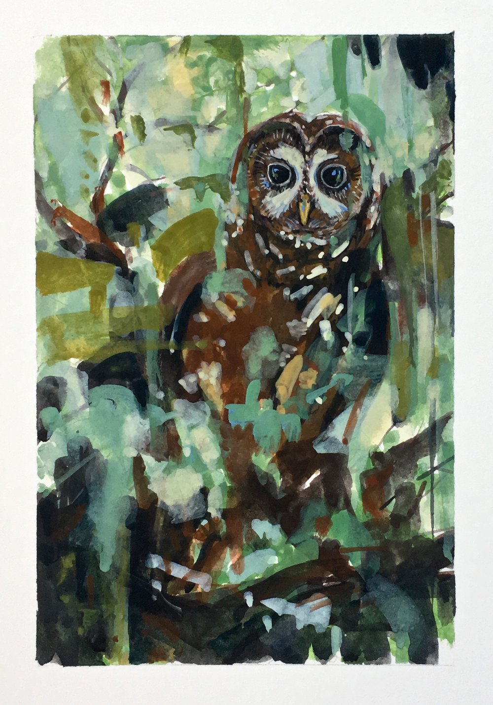 California Spotted Owl are nocturnal, sleeping during the day and hunting at night. They perch and pounce from their foraging site; waiting patiently for their prey to saunter by before pouncing.