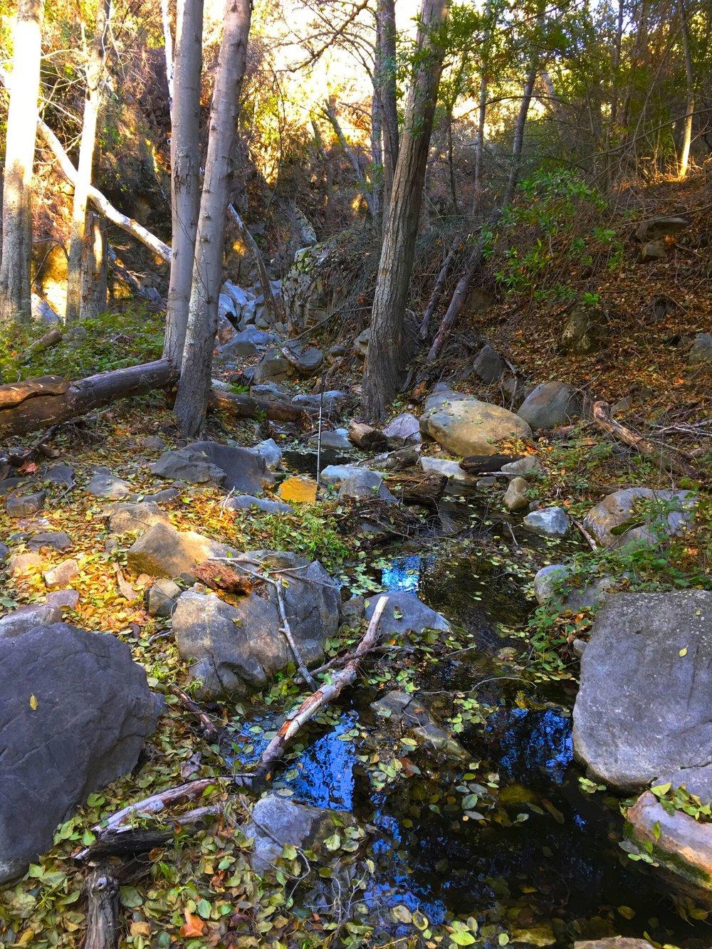 Alder Creek .jpg