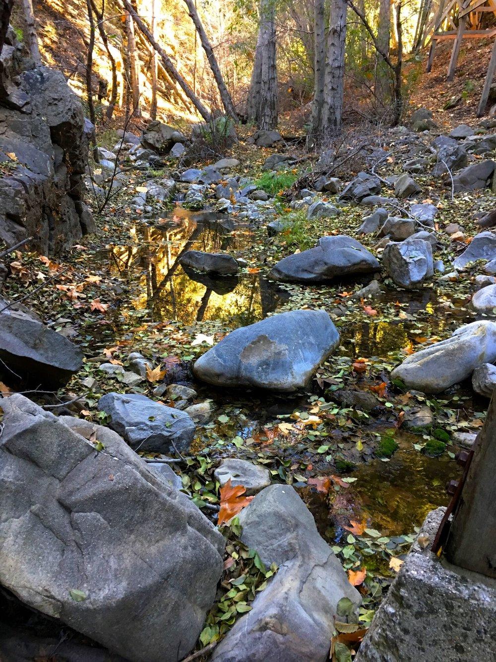 Alder Creek 2.jpg