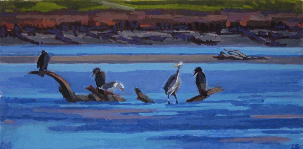 Estuary Birds