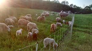 Horsenettle Farm