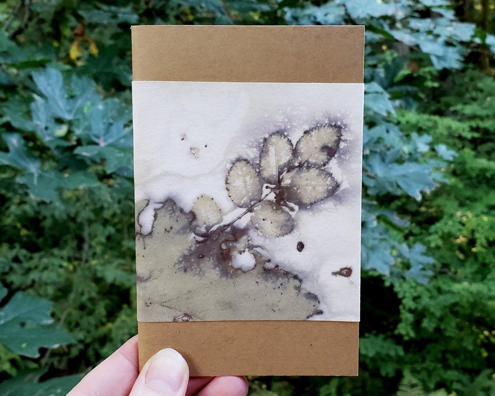 rose alder book.jpg
