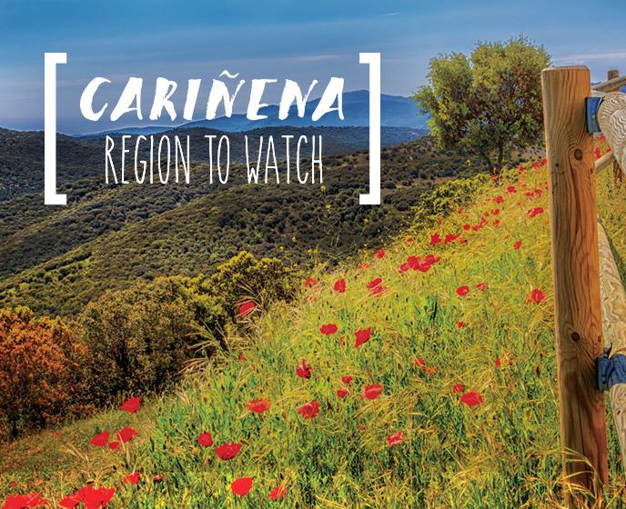 REGION TO WATCH: D.O.P. CARIÑENA   PR, Digital, Strategy, Integrated, Experiential, Creative