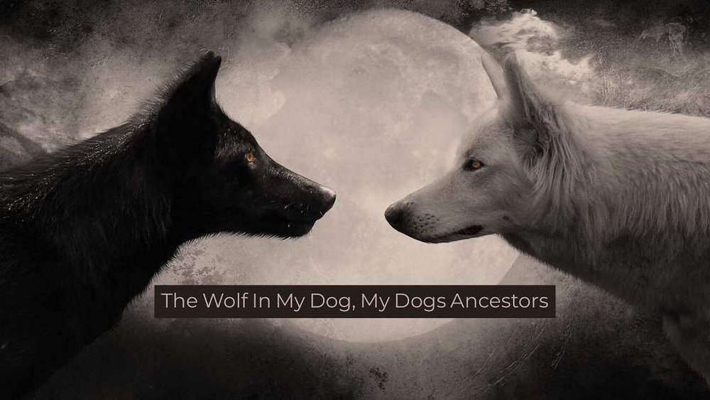 the-wolf-in-my-dog.jpg