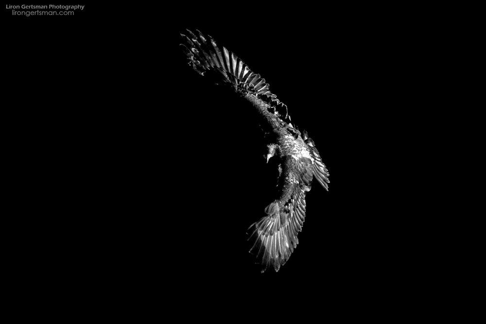 Eagle-web.jpg