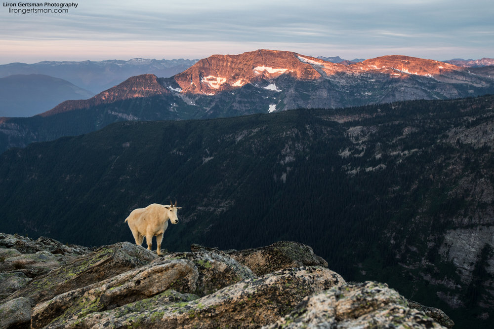 After a night shoot and a short sleep, I would wake up each morning before sunrise. Here, a goat stands as mountain peaks across the valley glow from the first rays of light hitting the landscape early in the morning.