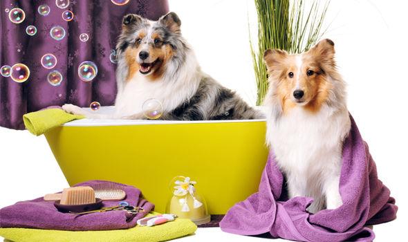 Dog-spa-590436.jpg
