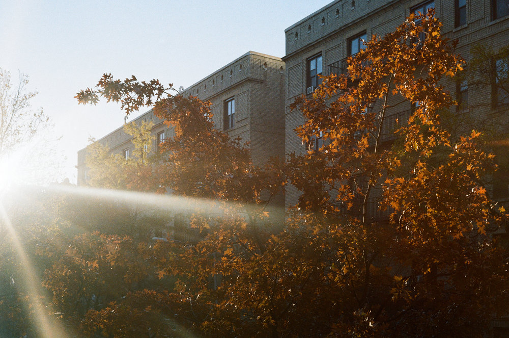 The view from my bedroom window in the morning. Canonet QL17, Kodak Gold 200.