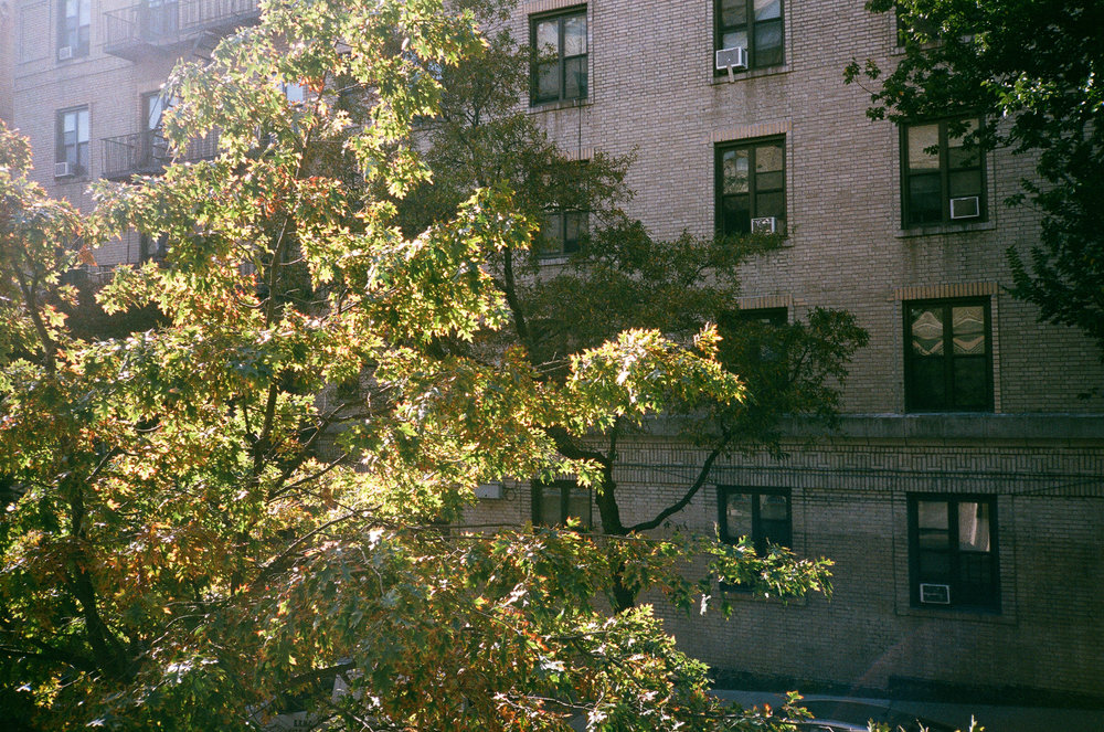 View from the bedroom window. Yashica T2, Fuji Superia X-Tra 400.