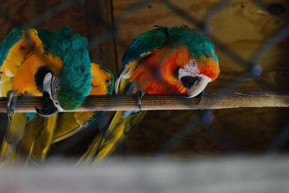 Parrots in captivity. Canon 5D Mark II, Canon 50mm f/1.2.