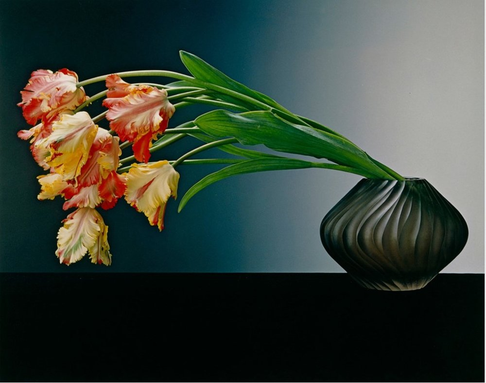 Parrot Tulips, 1988 – Robert Mapplethorpe