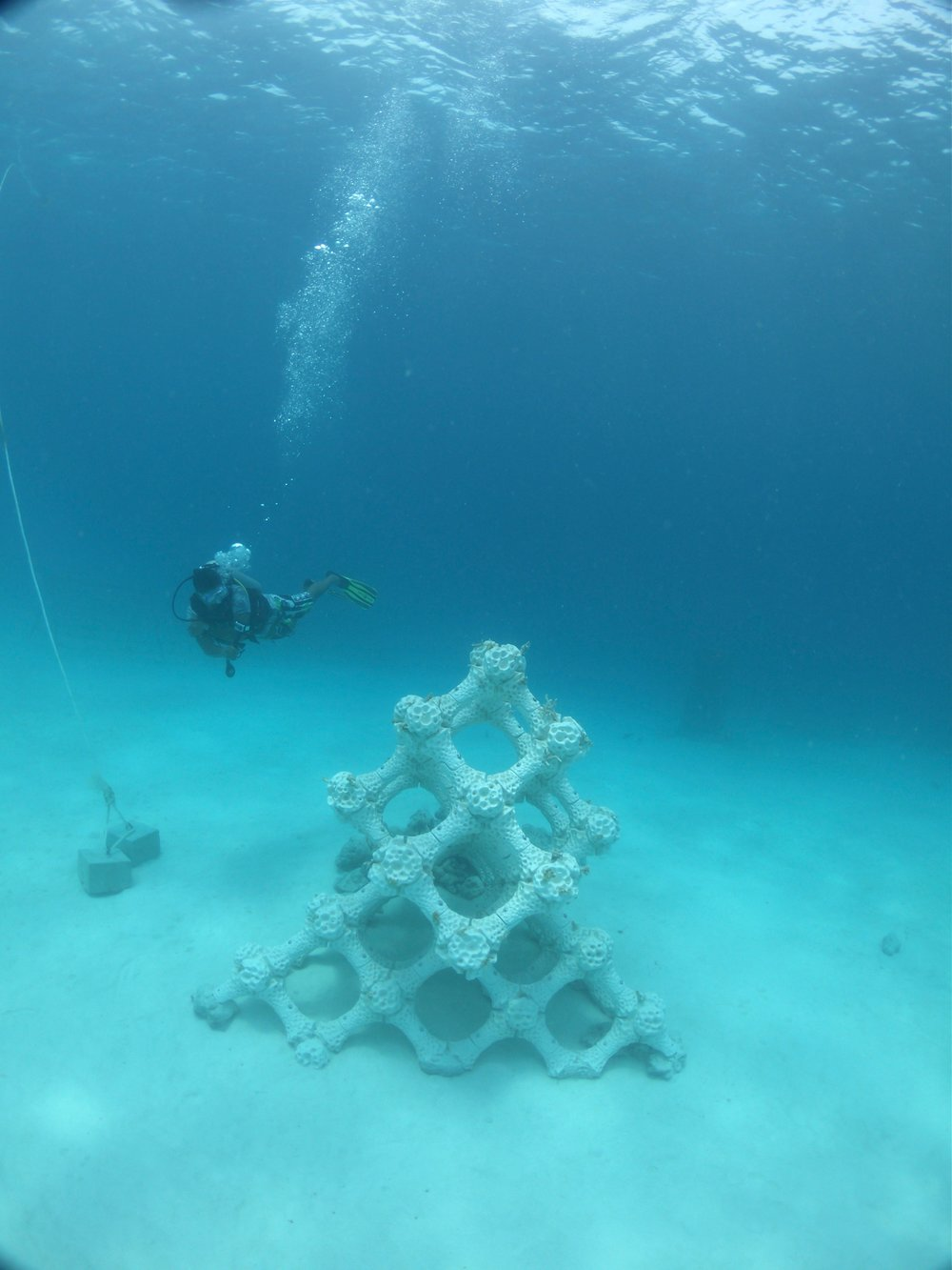 The MARS 3D printed lattice structure in the Maldives. Photo by Alex Goad