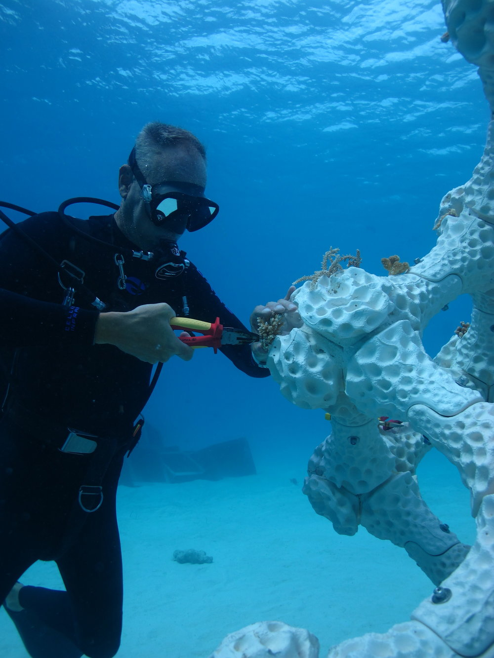 Diver Arjan Sierink attaching coral fragments to the MARS lattice for propagation. Photo by Alex Goad