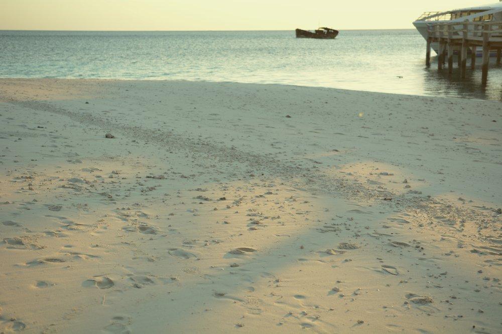 Heron Island, QLD.  Photo by Cloudy Rhodes.