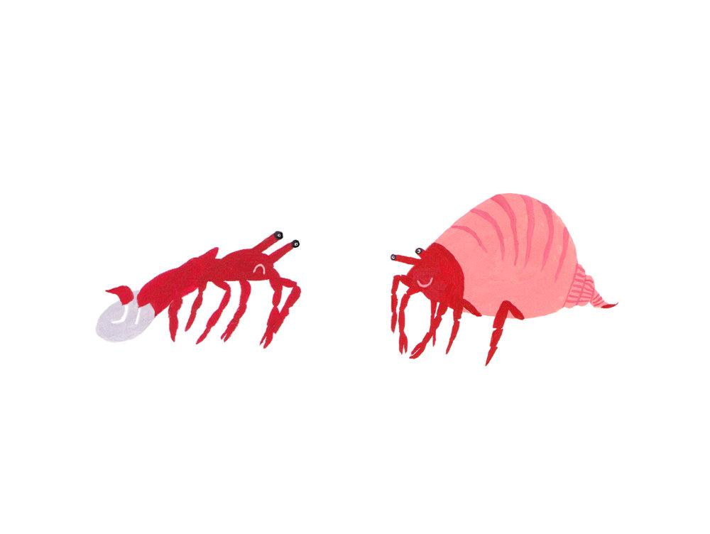 Seaweed image 2 - crustaceans.jpg
