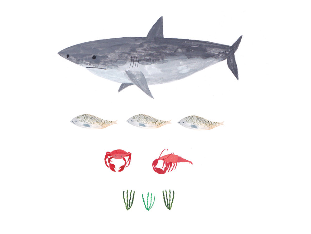 seaweed image 3 - food chain.jpg