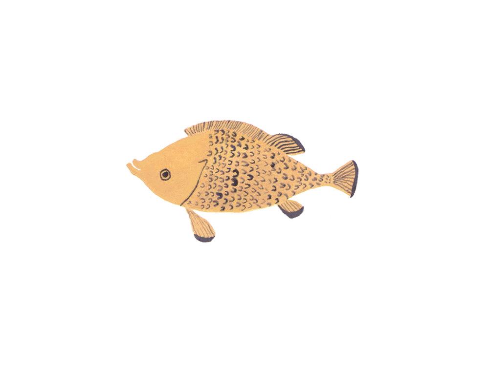 Seaweed image 4 - happy fish.jpg