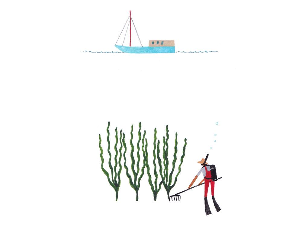 Seaweed image 8 - underwater farmer.jpg