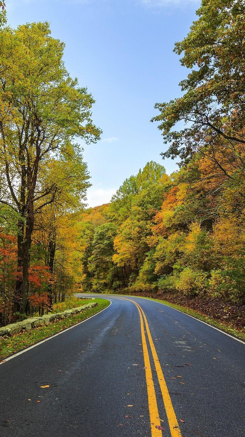 asphalt-autumn-beauty-237018.jpg