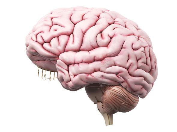 brain-463835.jpg