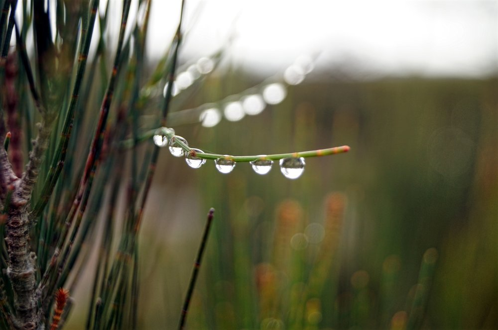 Droplets.jpg