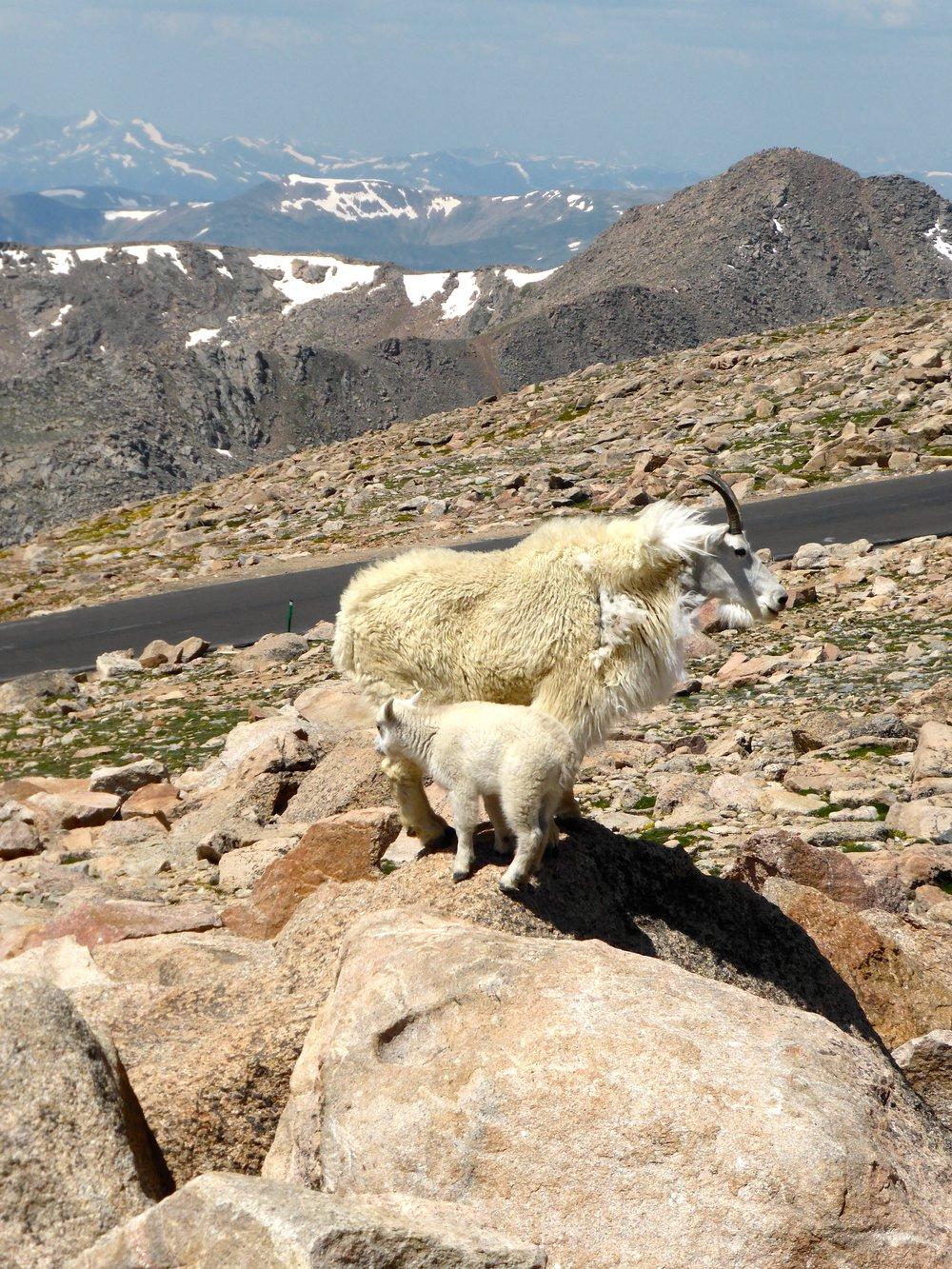 goat mountain.jpg