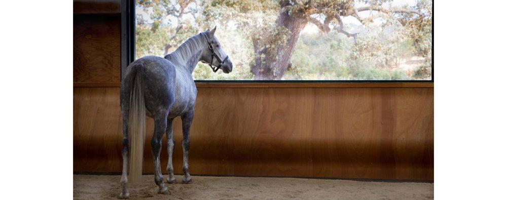 EponaMIND Horses-40.JPG
