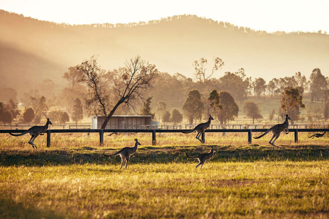 Whichever way you choose to enjoy this region, make sure you do it with a wine glass in your hand, and raise it in a toast of gratitude for the bounties of the magnificent Hunter Valley, and the Australian way of life.