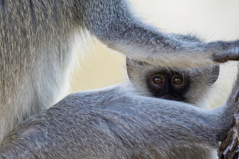 african wildlife -