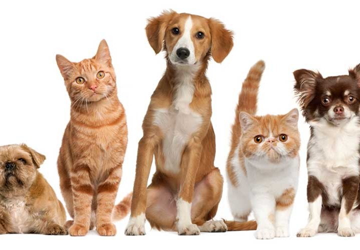 Pets-Animals-720x500.jpg