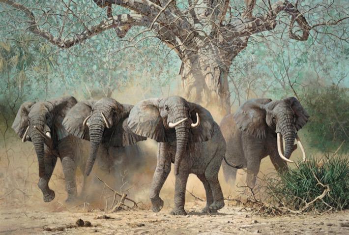 Bachelor Herd, Zimbabwe