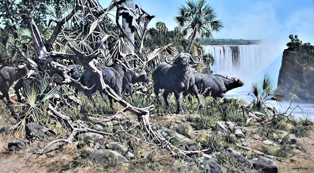 'Buffalo at Victoria Falls'  The Craig Bone donation for the SCI this year.