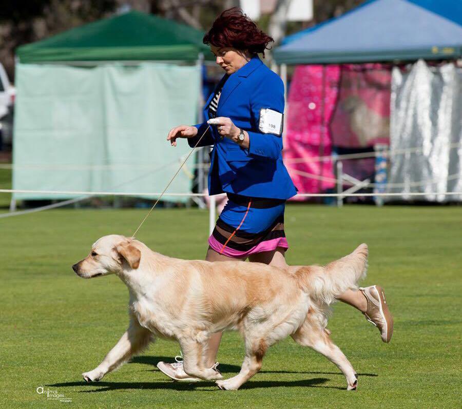 conarhu_golden_retrievers_perth_australia_ruth_connah_our_dogs_mia_gallery_2.jpg