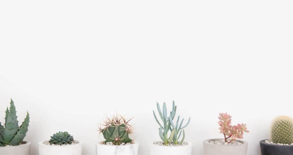 cactus_plants_01.jpg