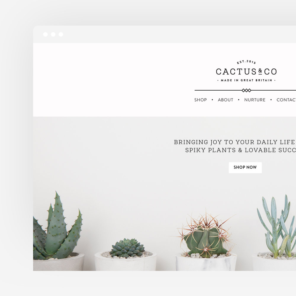 Cactus & Co.  Designing a lifestyle brand for all things green & spiky