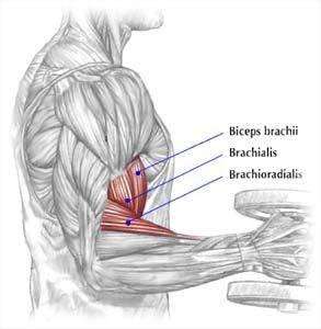 Photo from Delavier's Strength Training Anatomy