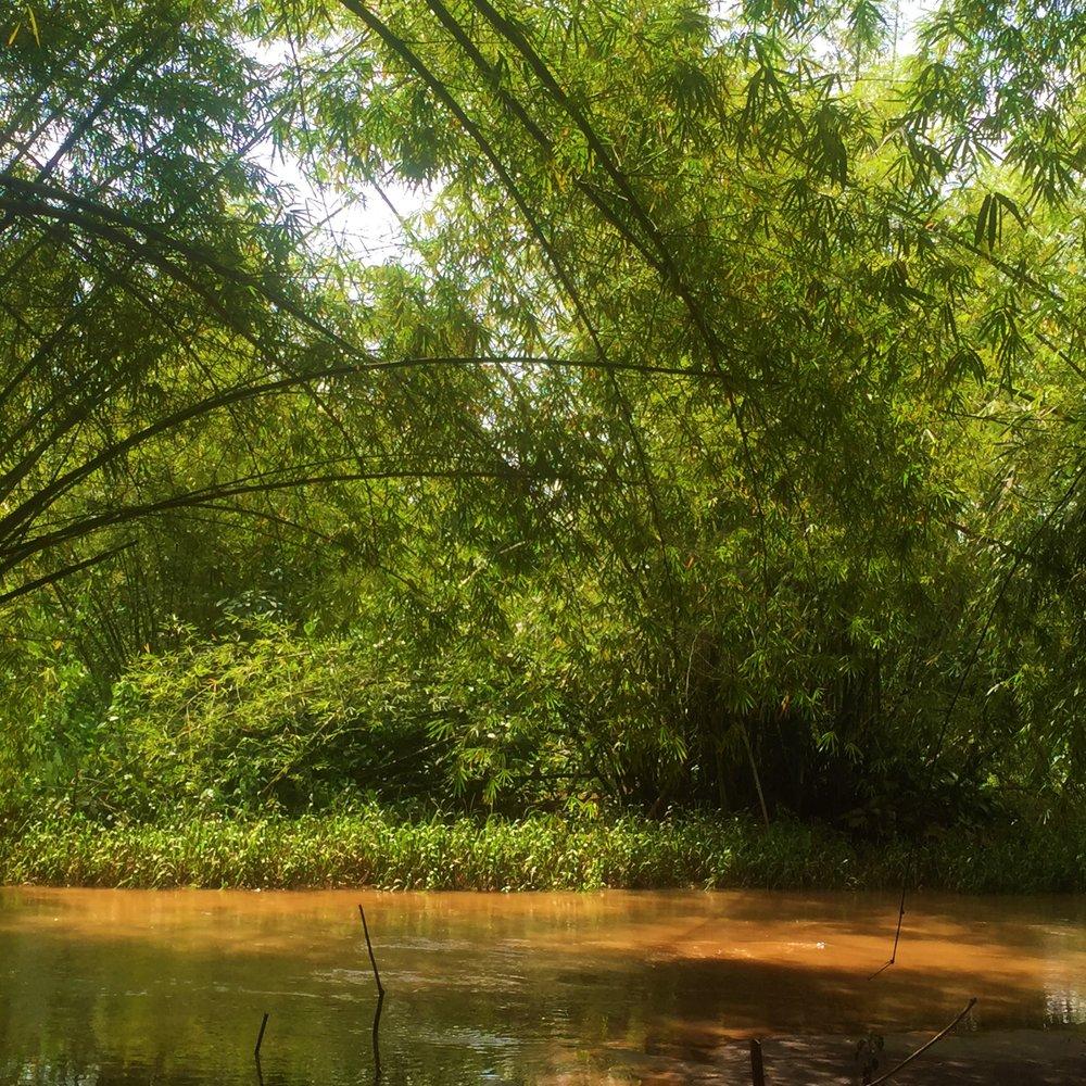 BENIN RIVER | The river flows through the Zoo