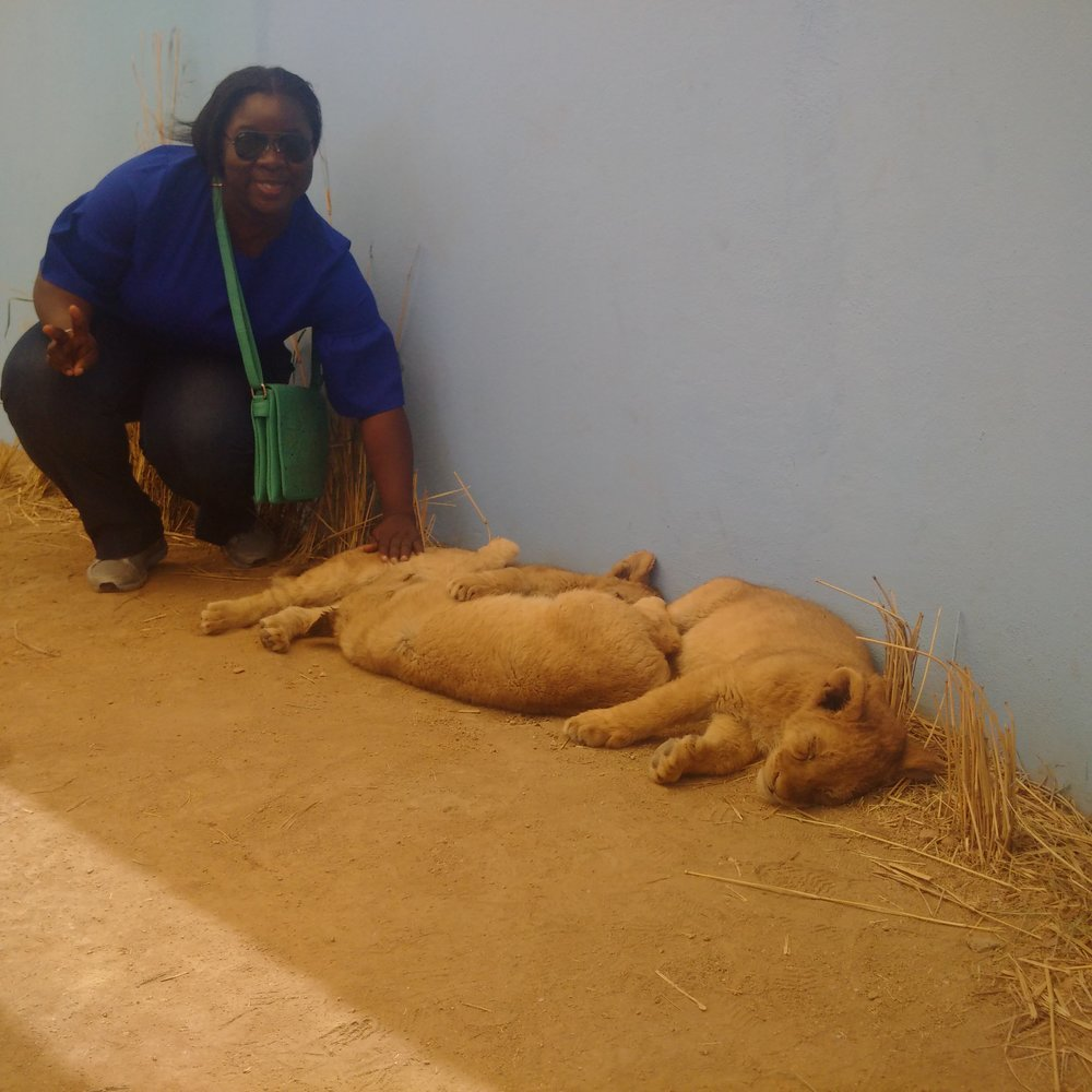 Papering Lion cubs