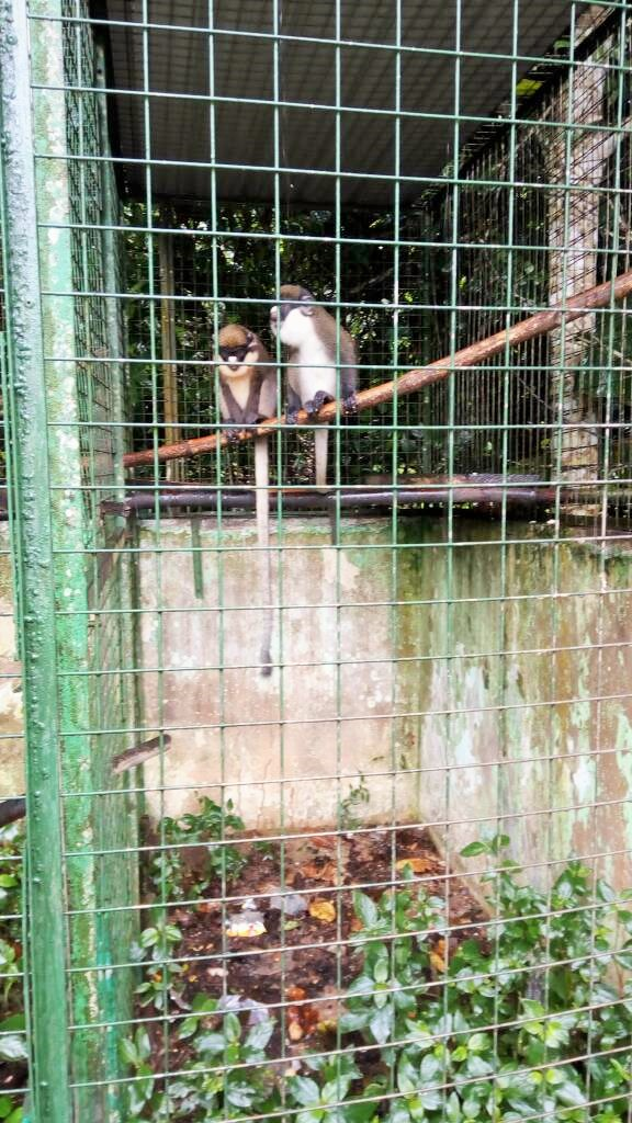 Monkey sanctuary