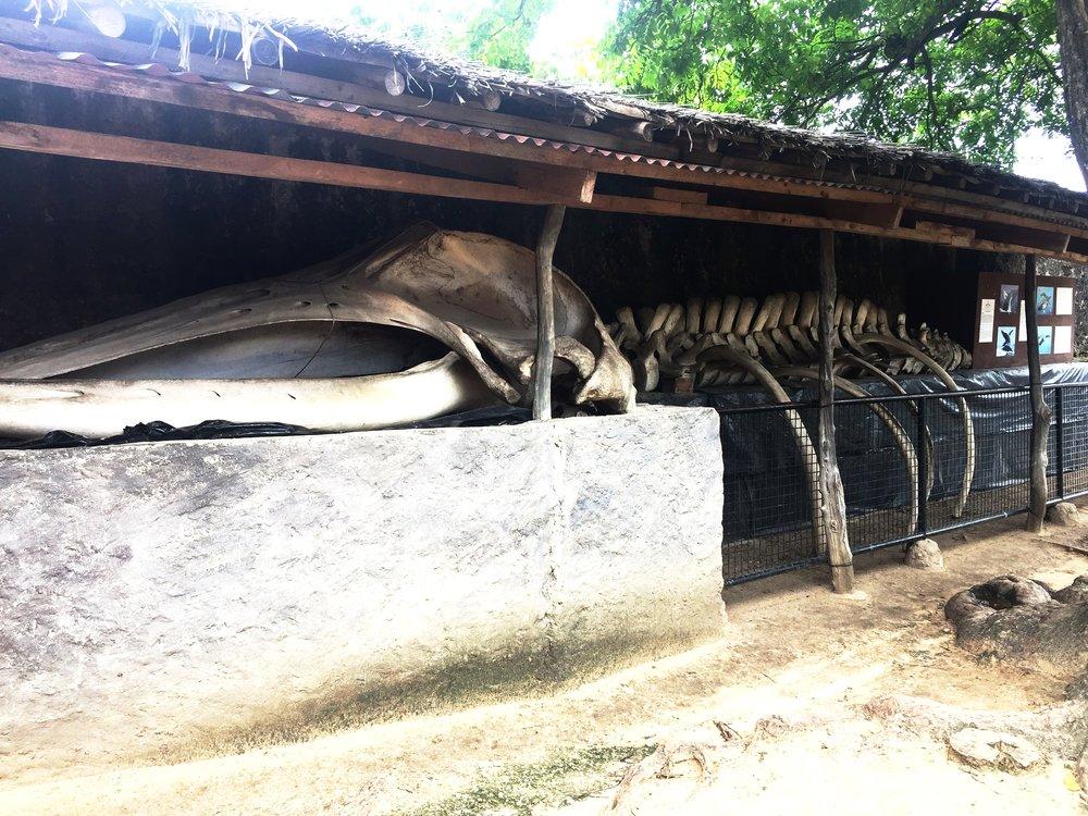 Fort Jesus | The Ajala Bug