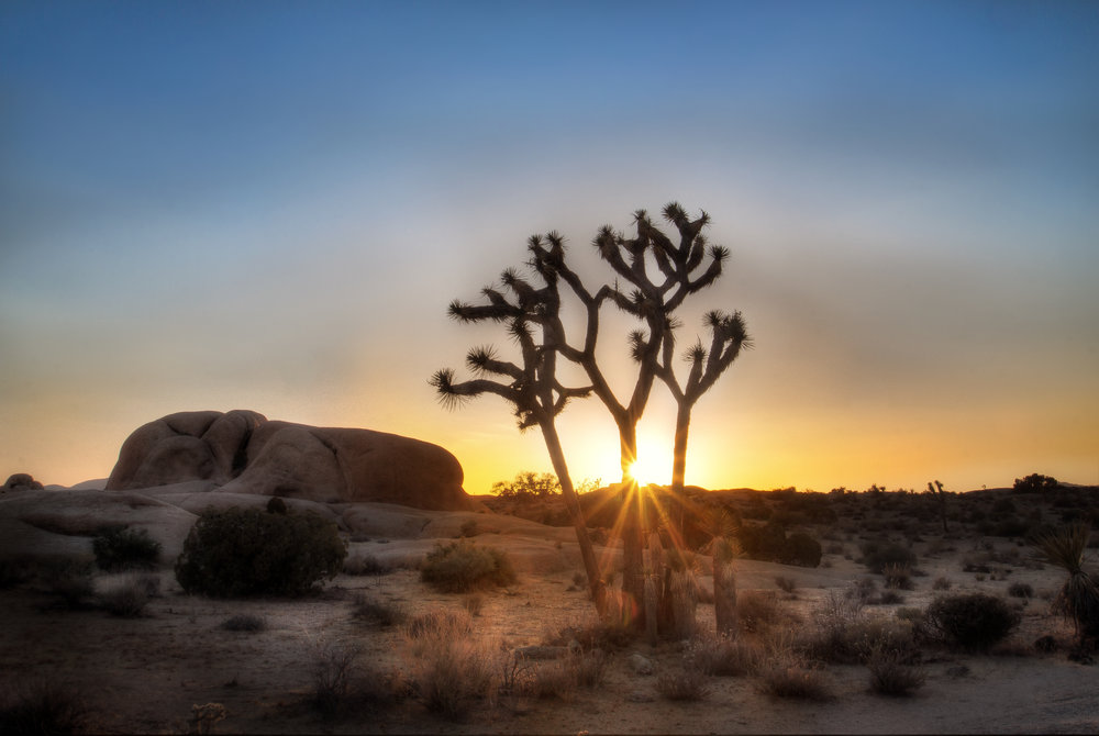 HDR_NR_JOSHUA TREE SUNSET.jpg
