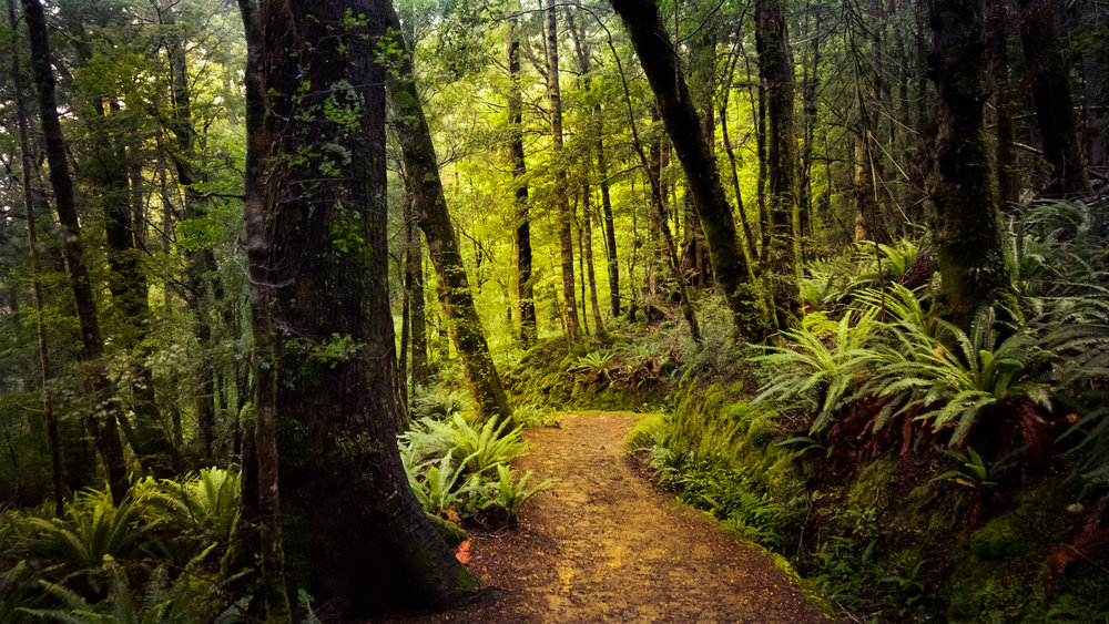 Kepler Track_Forest Trail_V2_DSC03449.jpg