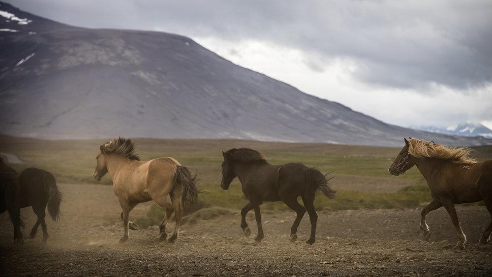 Iceland_084.jpg