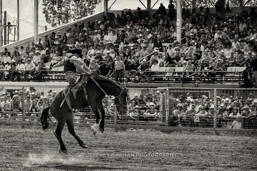 World Famous Bucking Horse Sale bronc rider