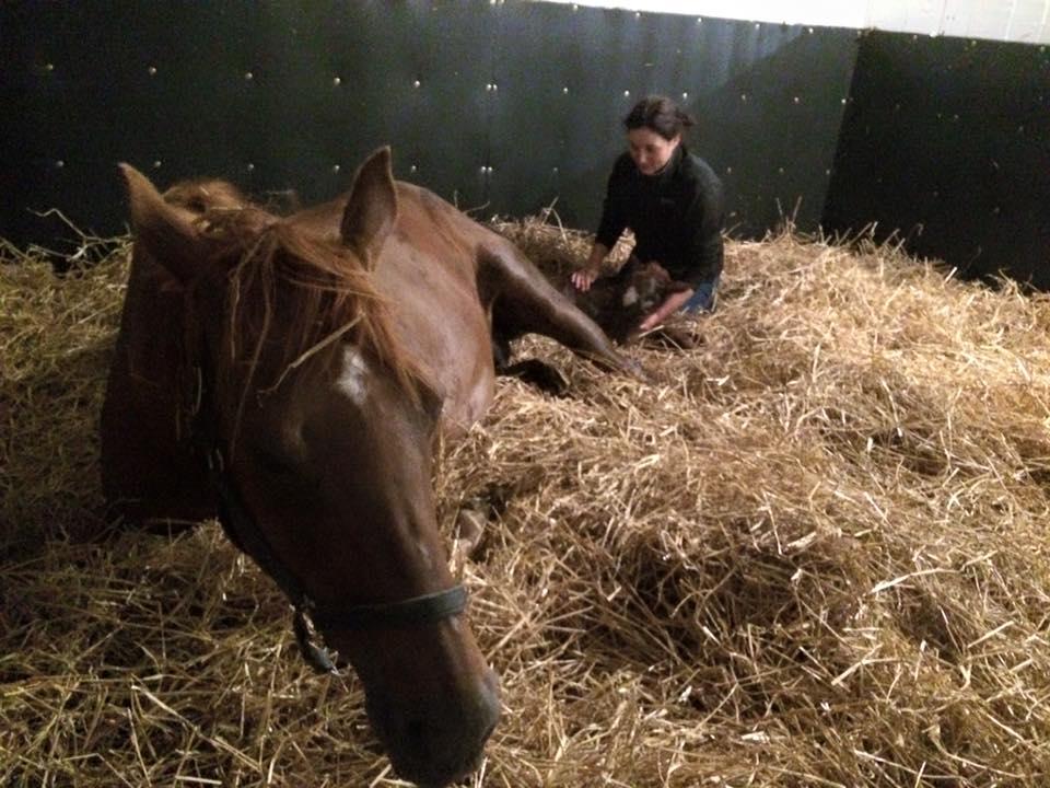 Shelley foaling a mare.jpg