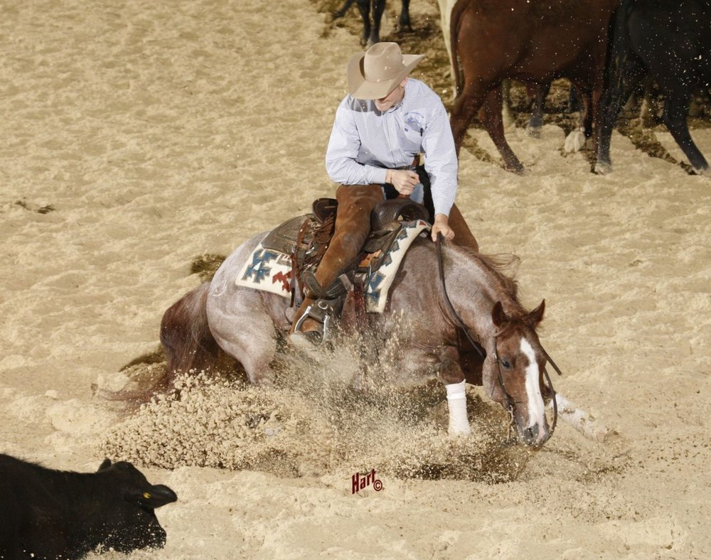 (Photo by Hart) The Boon — one of the King Ranch's current stallions, ridden by Jesse Lennox