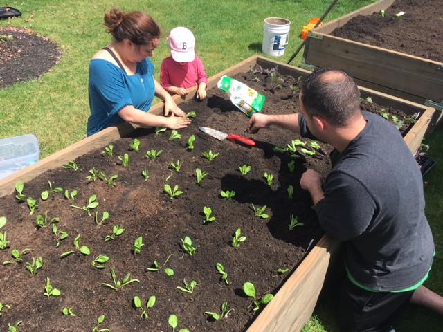 Fam Planting 5-7-17.JPG