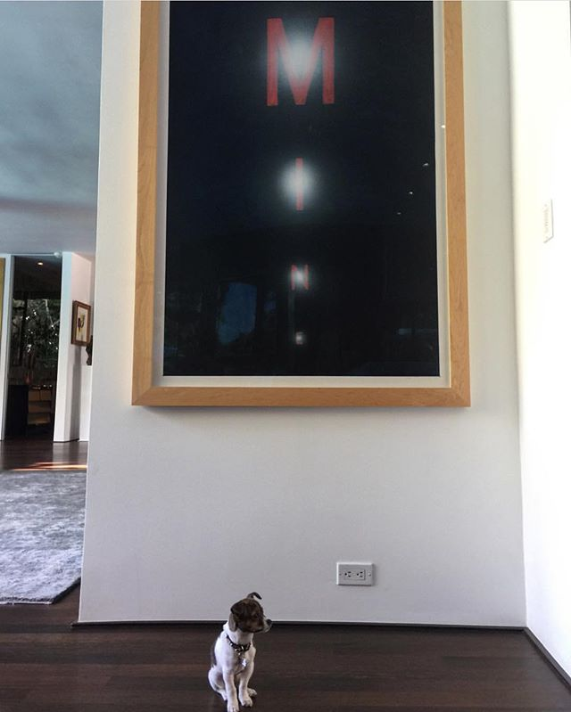 She's not yours.. she's mine 🤠 #ziggystardust x #edruscha #mine #art #artlover #artlovers #interiordesigner #decor #interiorstyle #artporn #dogsofinstagram #dogsofinsta